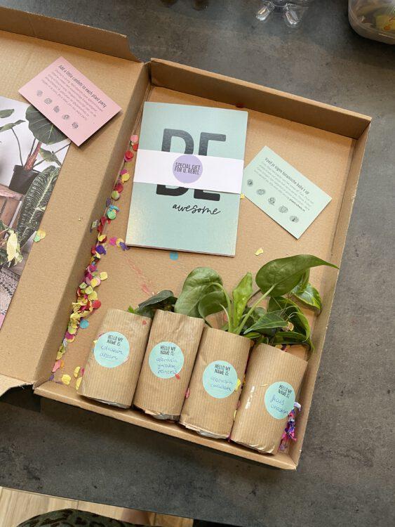 De Stekkie Surprise Box: voor elke plantenmama